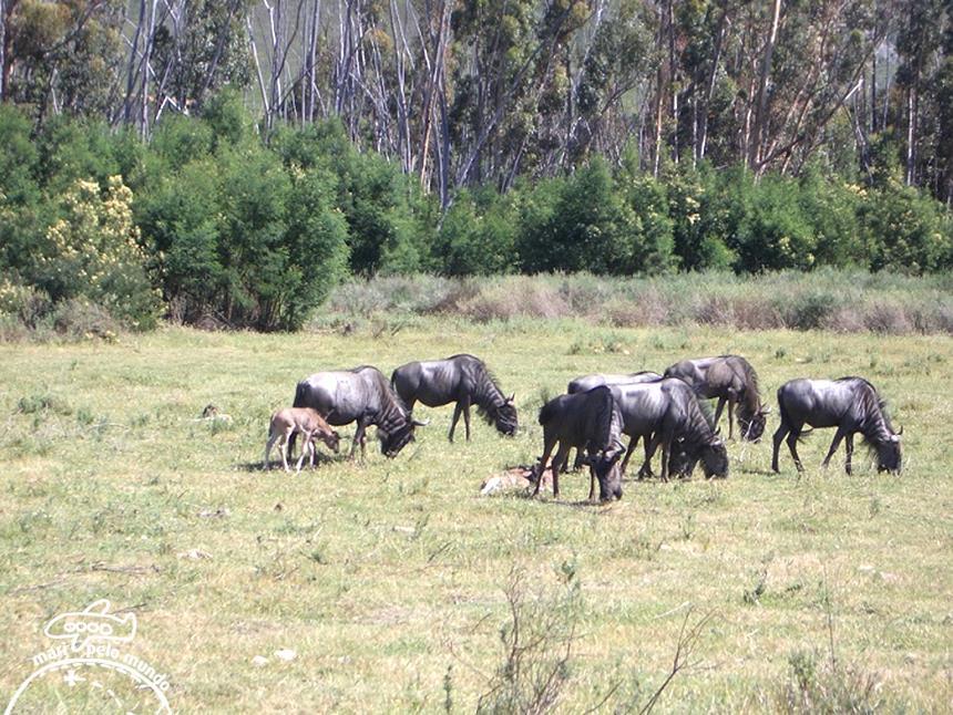 Fairy Glen Big 5 Safari Game Reserve Foto: Mari