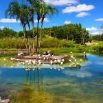 Parques de Orlando: Animal Kingdom