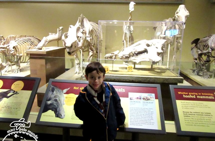 Exposicao de dinossauros