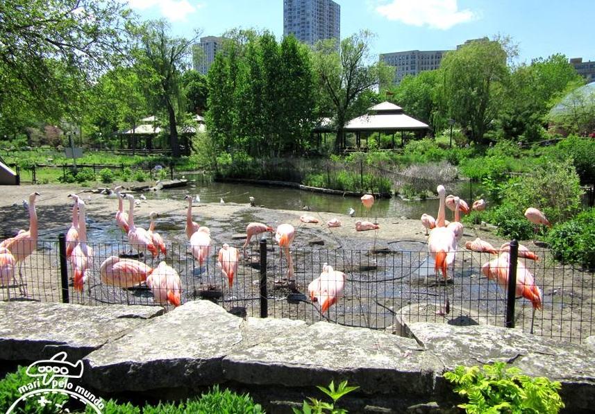 Flamingos no Lincoln Park Zoo
