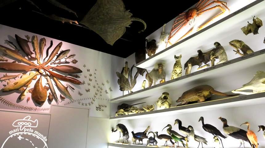 Musee Confluence - Animais