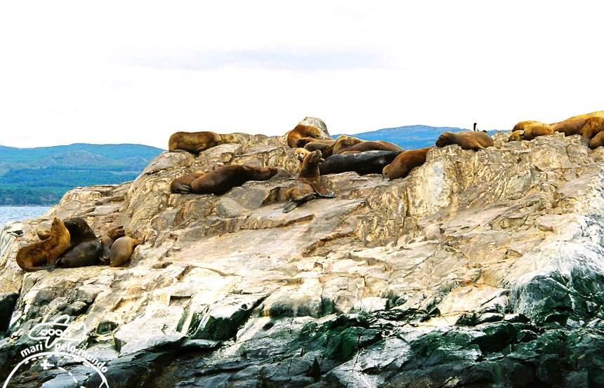 Ilha dos Lobos Marinhos