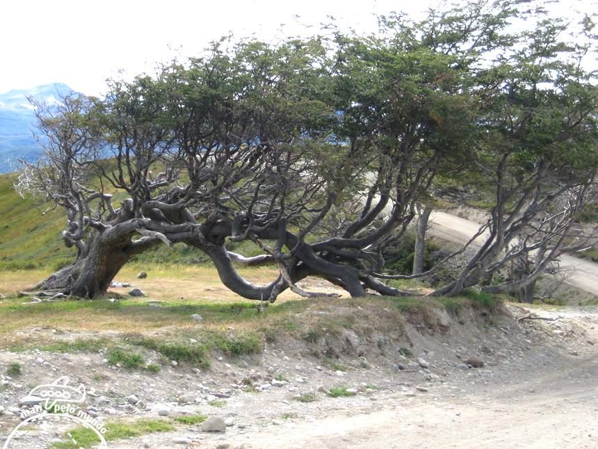 Vegetacao moldada pelo vento