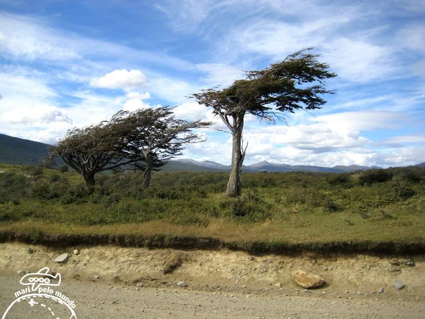 Vegetacao tipica da regiao moldada pelo vento
