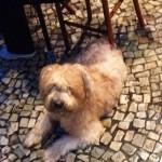Pet Travel: Rio de Janeiro Pet Friendly