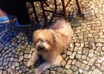 Rio Pet Friendly