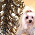 Pet Travel: Um dia de cão