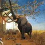 Milão: Jardins Públicos Indro Montanelli e o Museu Público de História Natural