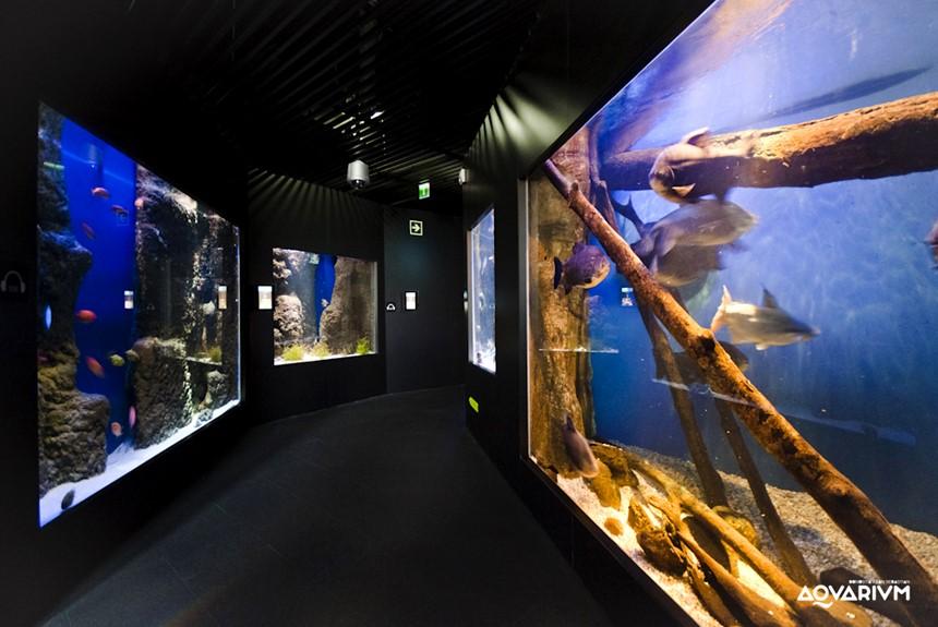 Aquarium-san-sebastian-acuarios-17 (Copy)