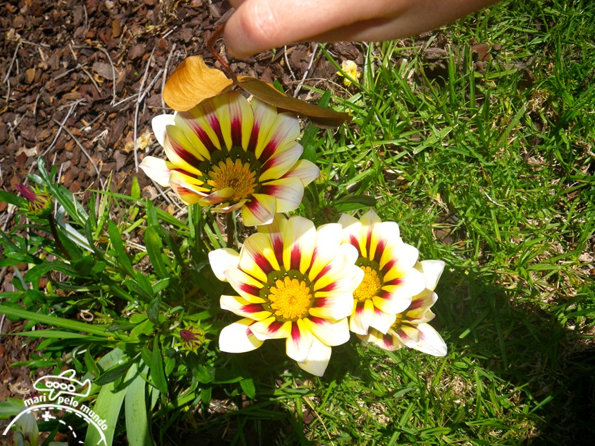 Flores em Évora