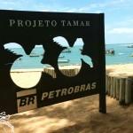 Praia do Forte com crianças: Projeto Tamar