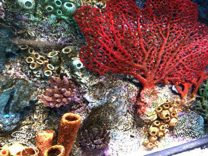 Sea Life Aquarium (3)
