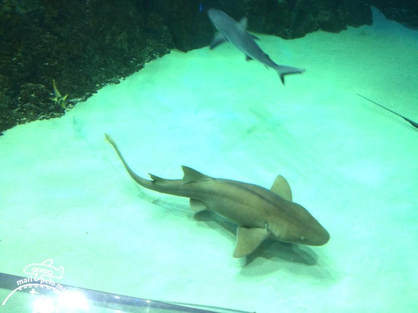 Sea Life Aquarium em Orlando (2)