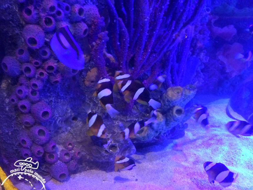 Sea Life Aquarium em Orlando