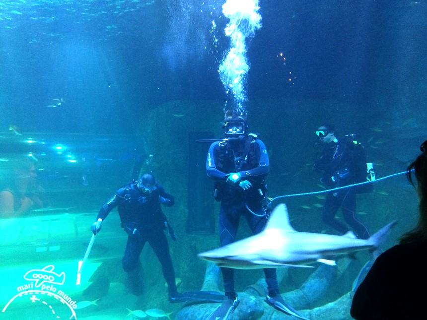 Visitando o Sea Life Aquarium em Orlando