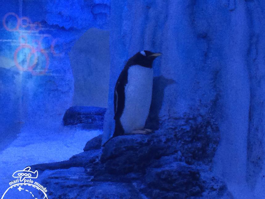 6-pinguins-sempre-lindos-e-simpaticos-copy