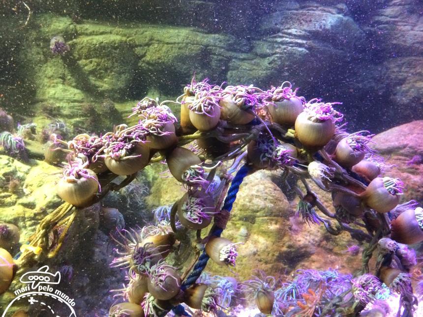 7-anemonas-corais-peixes-de-todas-as-partes-do-mundo-copy