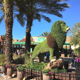Um dia perfeito no Bush Gardens em Tampa