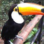 Parque das Aves de Foz do Iguaçu com crianças