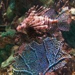 7 Razões para visitar o Sea World em Orlando
