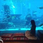 Aquários em Dubai: Qual visitar?