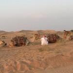 Como são os tours no Deserto de Dubai