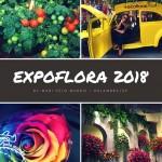 Como visitar a Expoflora 2018 em Holambra