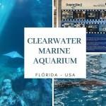 O que fazer na Flórida? Clearwater Marine Aquarium